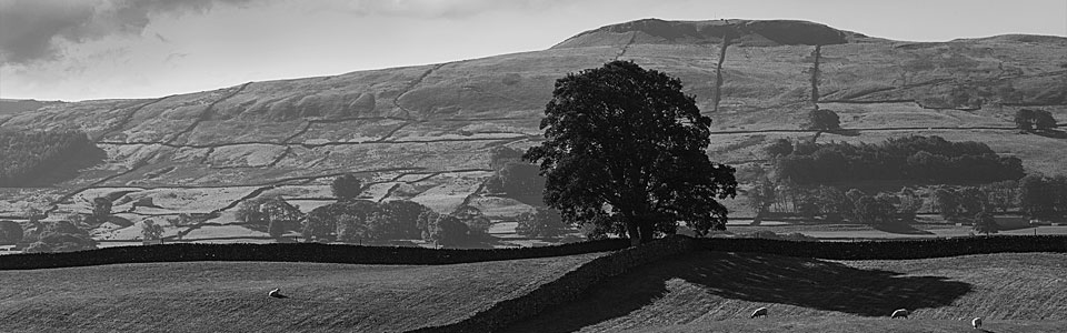 Photo: Wensleydale, North Yorkshire
